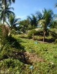 Residential Lot for Sale in Tinago Inopacan Leyte