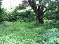 Farm Lot for RUSH sale Concepcion Batangas City
