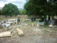 Mango Orchard for Sale in San Juan Cabangan Zambales