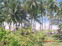 Beach Lot for Sale by Owner Loon Bohol View Over Cebu Strait