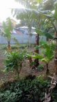 Mataas na Kahoy Batangas Farm Lot with House for RUSH Sale