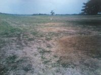 Tulega, Moncada, Tarlac Farm Lot / Land for RUSH Sale