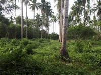 Tiaong Quezon Farm Lot for Sale