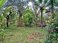 Brgy. Masin, Tayabas, Quezon Province Farm Lot For Sale