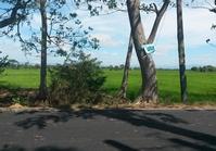 Hinukay Baliuag Bulacan Foreclosed Vacant Lot Sale