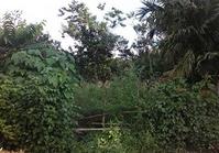Palasan, Sta Cruz, Laguna Foreclosed Vacant Lot for Sale