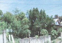 Alejo St Asingan Pangasinan Vacant Lot Sale