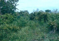 Tuguegarao Echague Isabela Foreclosed Vacant Lot Sale