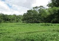 Barangay Tanghawan, Dingle, Iloilo Vacant Lot for Sale