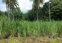 Poblacion, Tayasan, Negros Oriental Vacant Lot for Sale