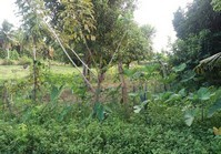 Rizal, Sagay City, Negros Occidental Vacant Lot for Sale
